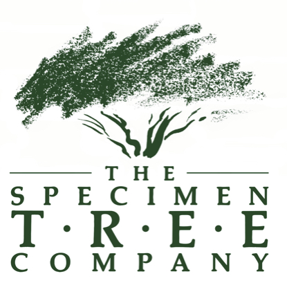 The Specimen Tree company
