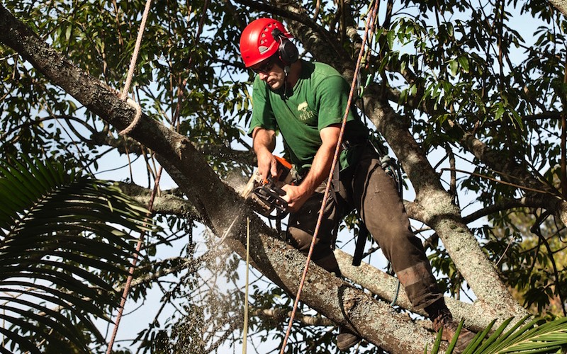 Specimen Tree company - Pruning and Surgery